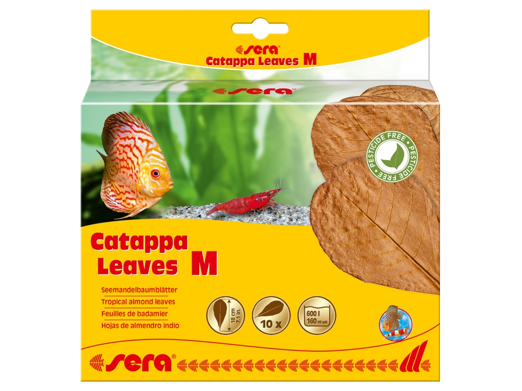 sera Catappa Leaves M 16