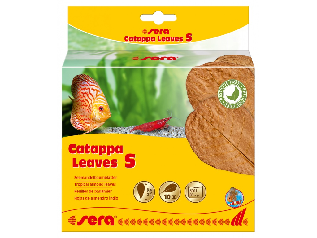 sera Catappa Leaves S 10